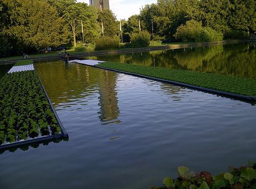 Bepflanzung im Wasserbecken in Berlin (Bild: Silke Gebel, MdA; CC BY-NC-ND 2.0)