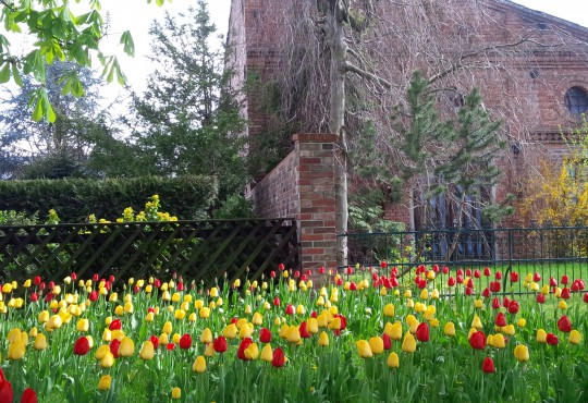 Grüne Blumenwiese (Bild: Silke Gebel, MdA; CC BY-NC-ND 2.0)