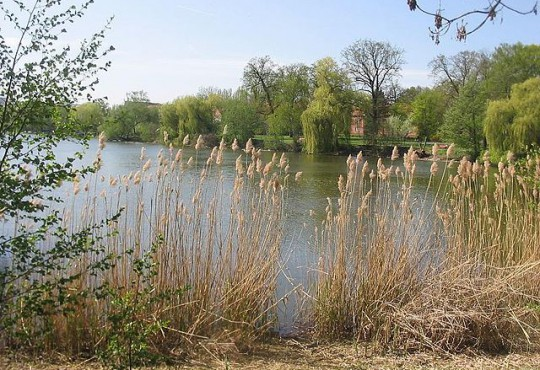 Grimnitzsee in Berlin-Spandau (Bild: Lienhard Schulz, CC BY-SA 3.0)