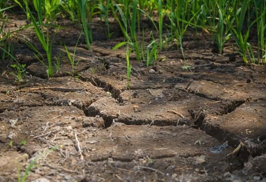 Rissiger Boden in Berlin (Bild: Paul Schulze / Humboldt Universität zu Berlin CC-BY 2.0)