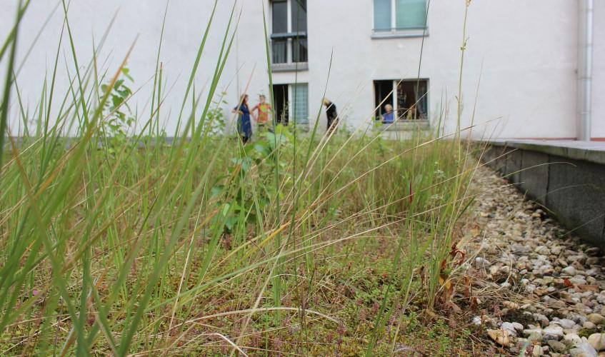 Besichtigung-mit-Sabine-Weißler-eines-Gründachs-in-Berlin-MitteImage-Image-Katharina-Franziska-Kremkau-Silke-Gebel-CC-BY-4.0